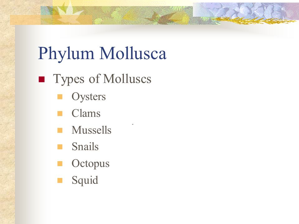 Phylum Mollusca Types of Molluscs Oysters Clams Mussells Snails