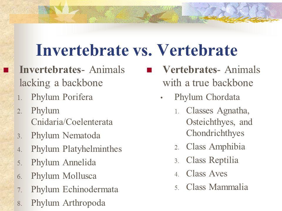 Invertebrate vs. Vertebrate