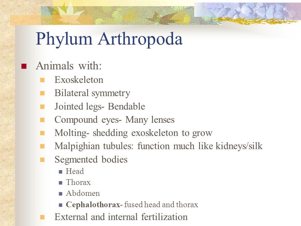 Phylum Arthropoda Animals with: Exoskeleton Bilateral symmetry
