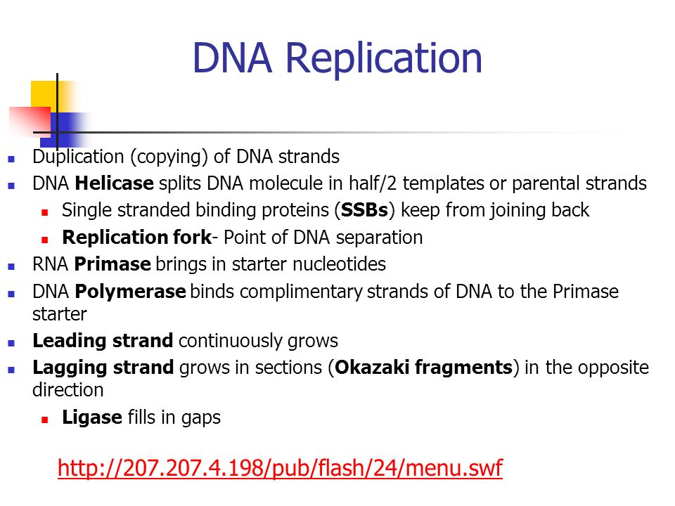 DNA Replication http://207.207.4.198/pub/flash/24/menu.swf