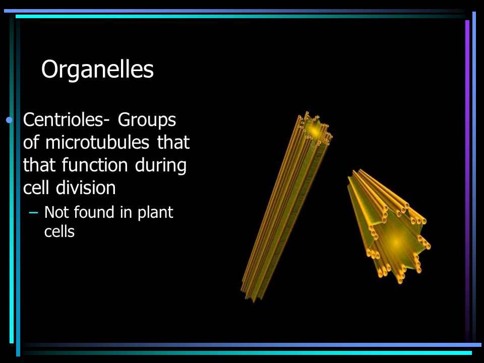 Organelles Centrioles- Groups of microtubules that that function during cell division.