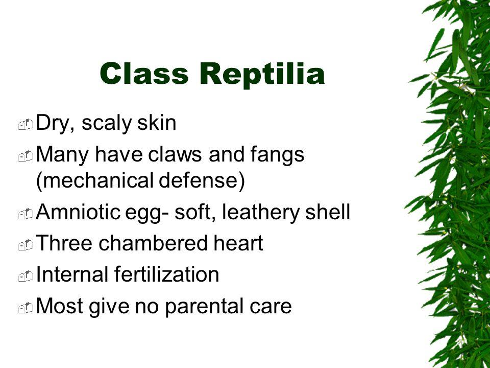 Class Reptilia Dry, scaly skin