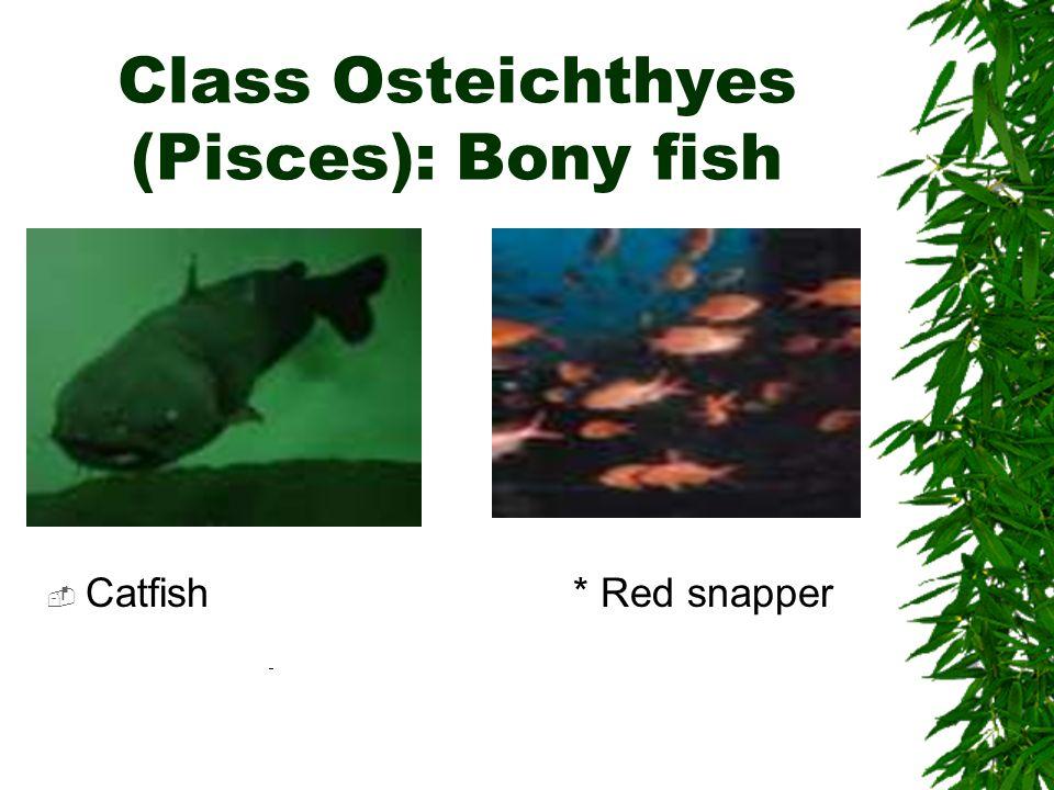 Class Osteichthyes (Pisces): Bony fish