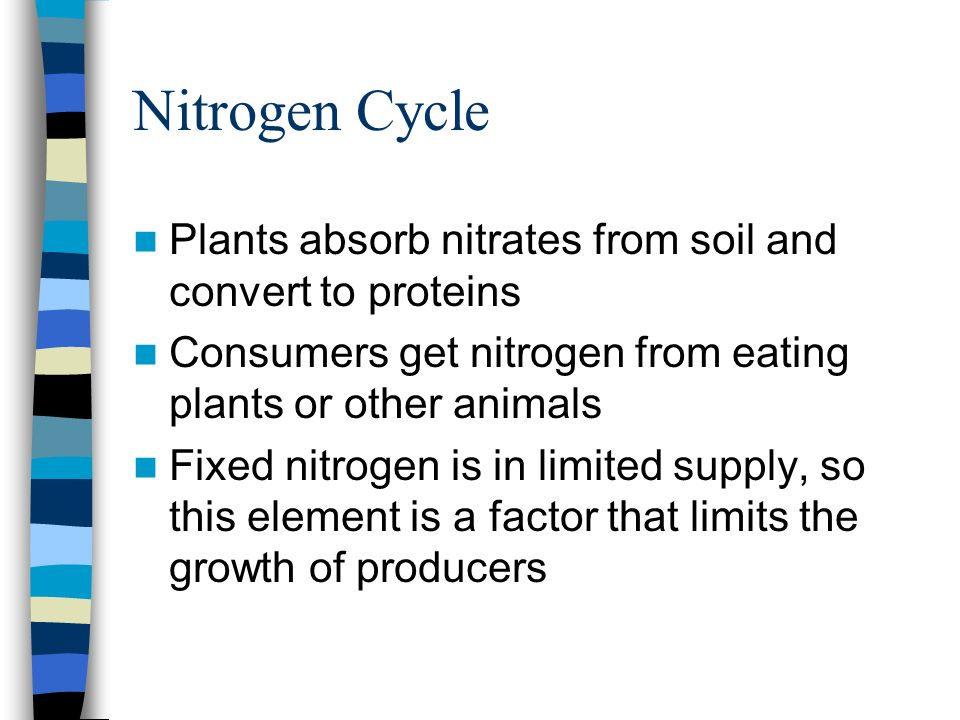 Nitrogen Cycle Plants absorb nitrates from soil and convert to proteins. Consumers get nitrogen from eating plants or other animals.