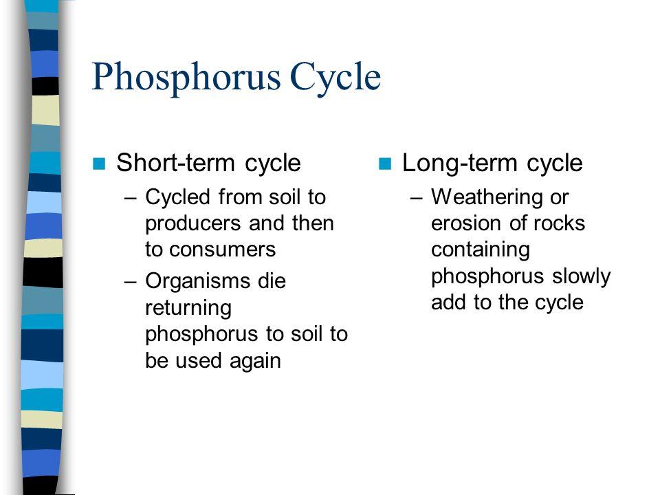Phosphorus Cycle Short-term cycle Long-term cycle