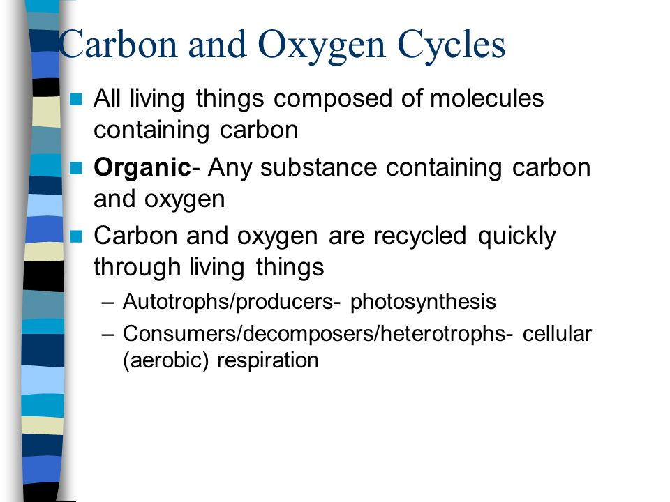 Carbon and Oxygen Cycles