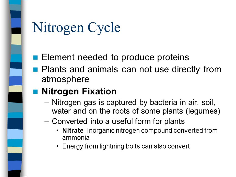 Nitrogen Cycle Element needed to produce proteins