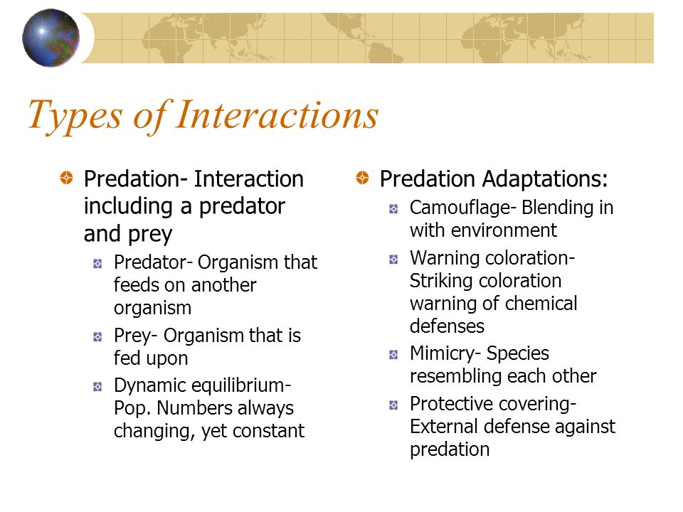Types of Interactions Predation- Interaction including a predator and prey. Predator- Organism that feeds on another organism.