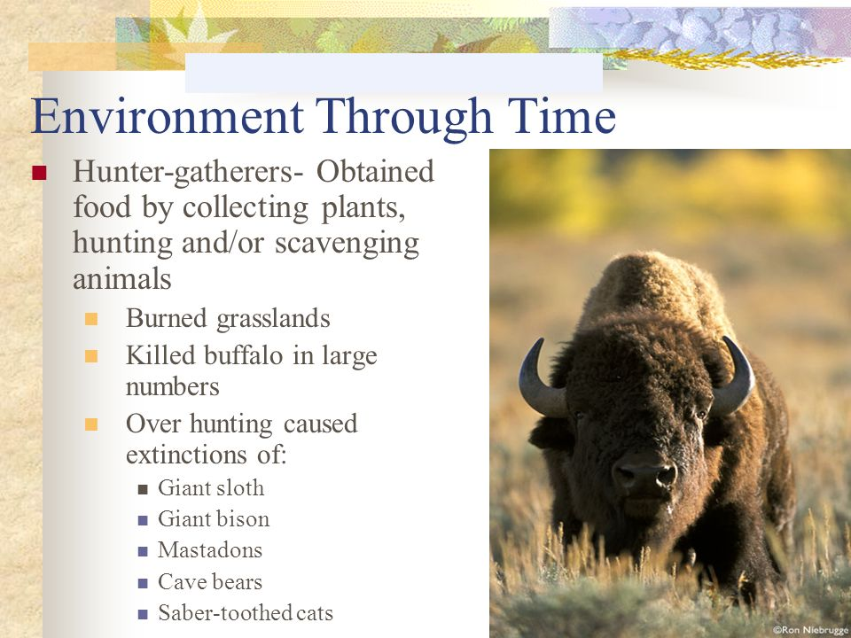 Environment Through Time