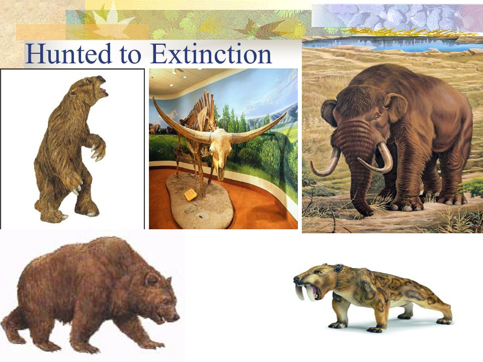 Hunted to Extinction