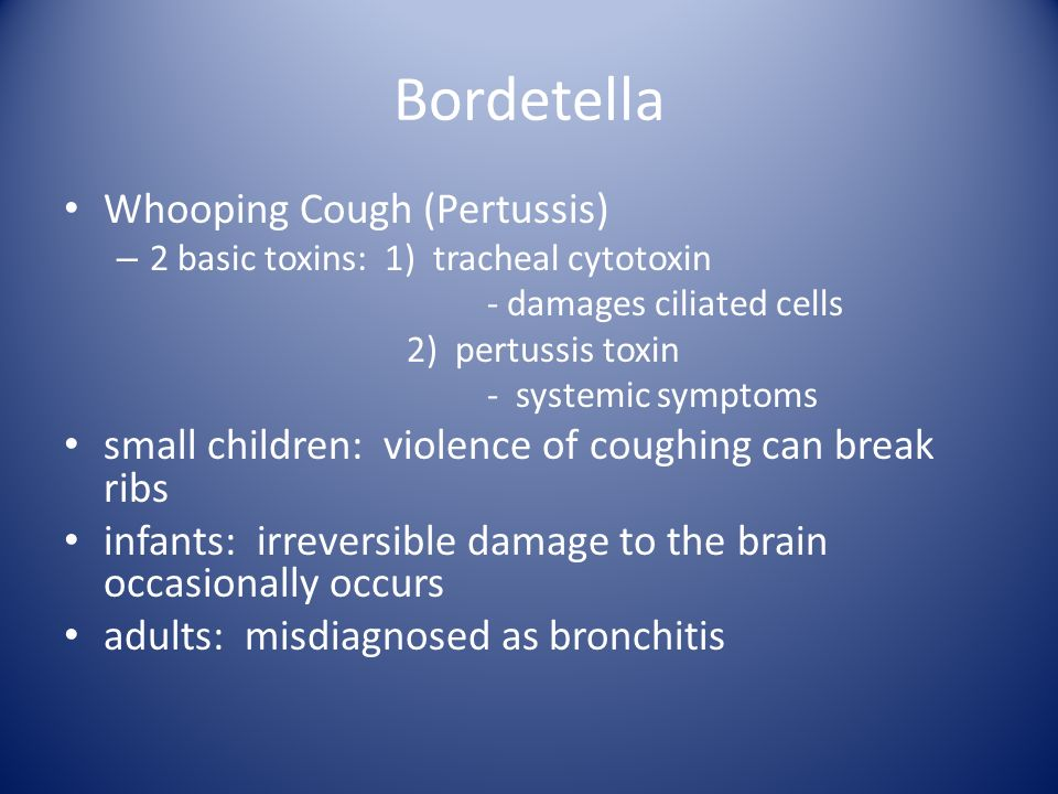 Bordetella Whooping Cough (Pertussis)