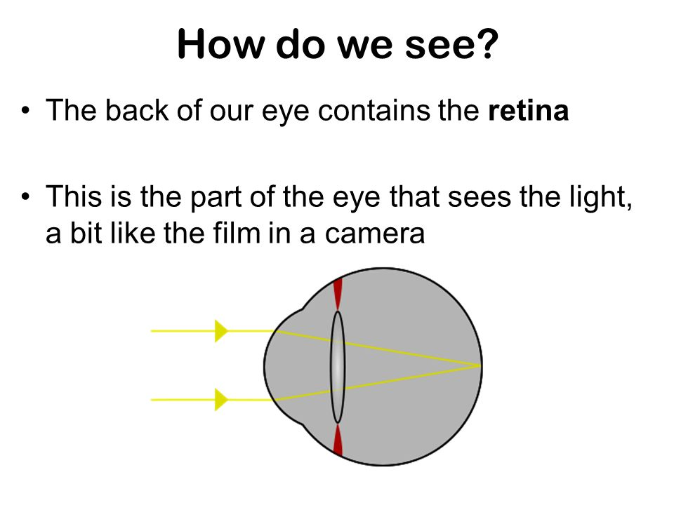 How do we see The back of our eye contains the retina