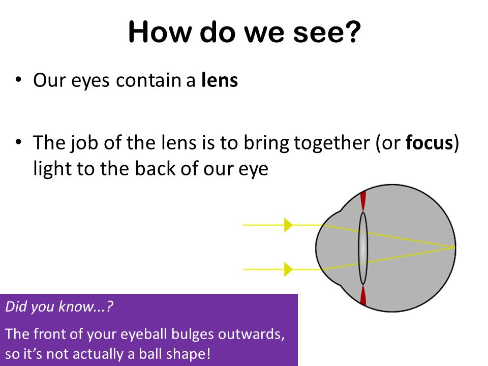 How do we see Our eyes contain a lens