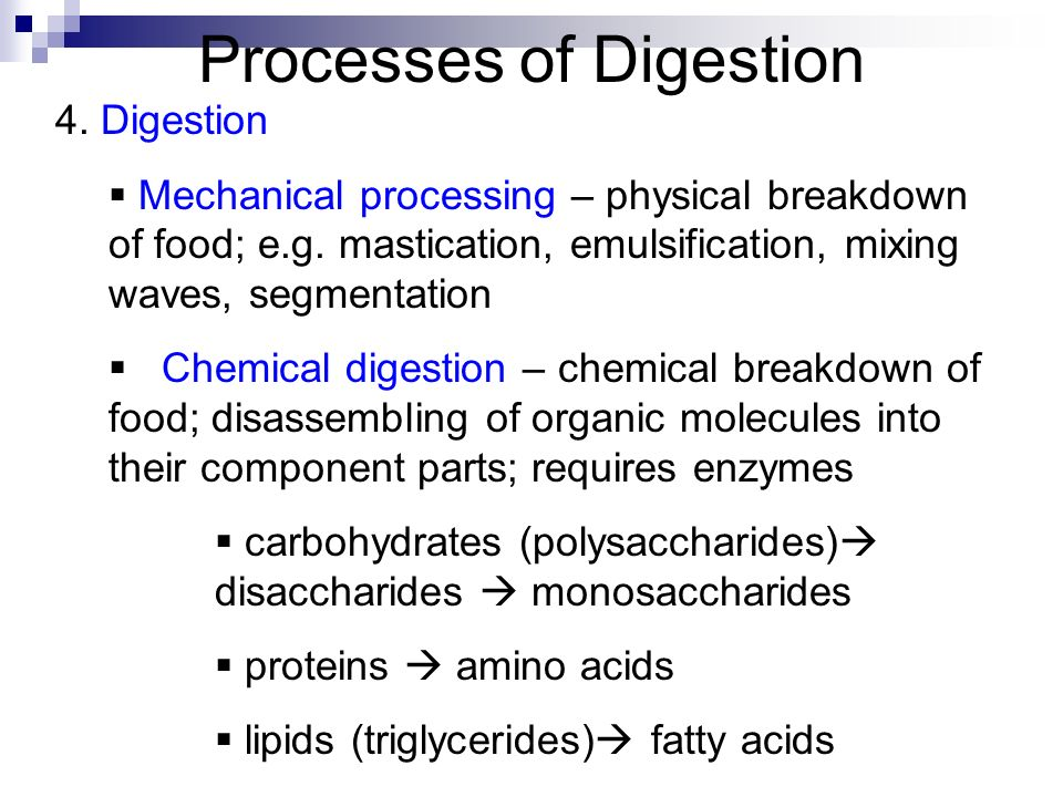 chemical and physical processes of digestion Mechanisms of chemical digestion chemical digestion is the enzyme-mediated, hydrolysis process that breaks down large macronutrients into smaller molecules.
