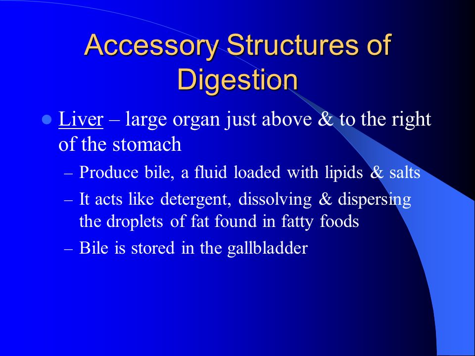 Accessory Structures of Digestion
