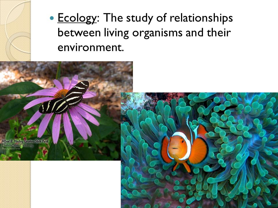 The Campus Ecologist