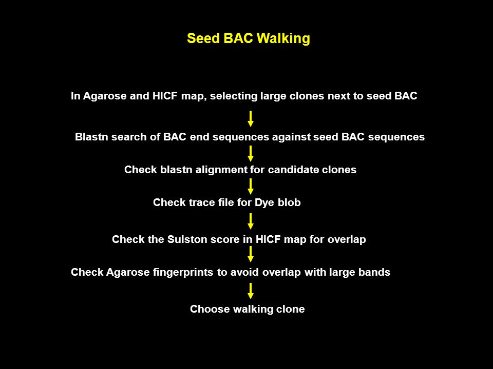 Seed BAC Walking In Agarose and HICF map, selecting large clones next to seed BAC. Blastn search of BAC end sequences against seed BAC sequences.