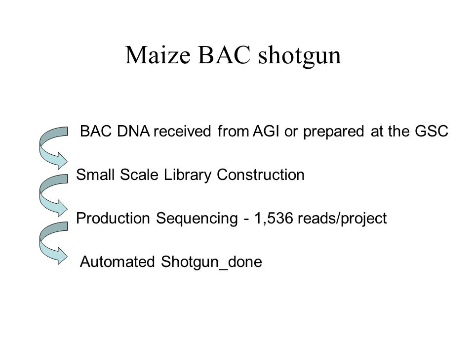 Maize BAC shotgun BAC DNA received from AGI or prepared at the GSC