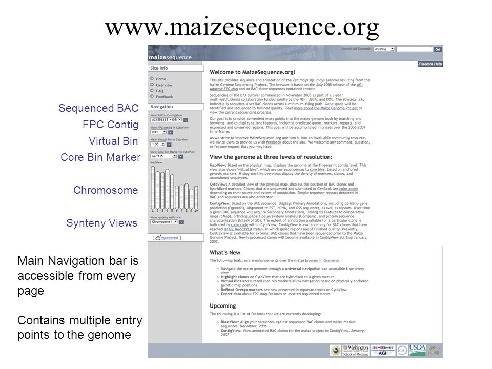 www.maizesequence.org Sequenced BAC. FPC Contig. Virtual Bin. Core Bin Marker. Chromosome. Synteny Views.