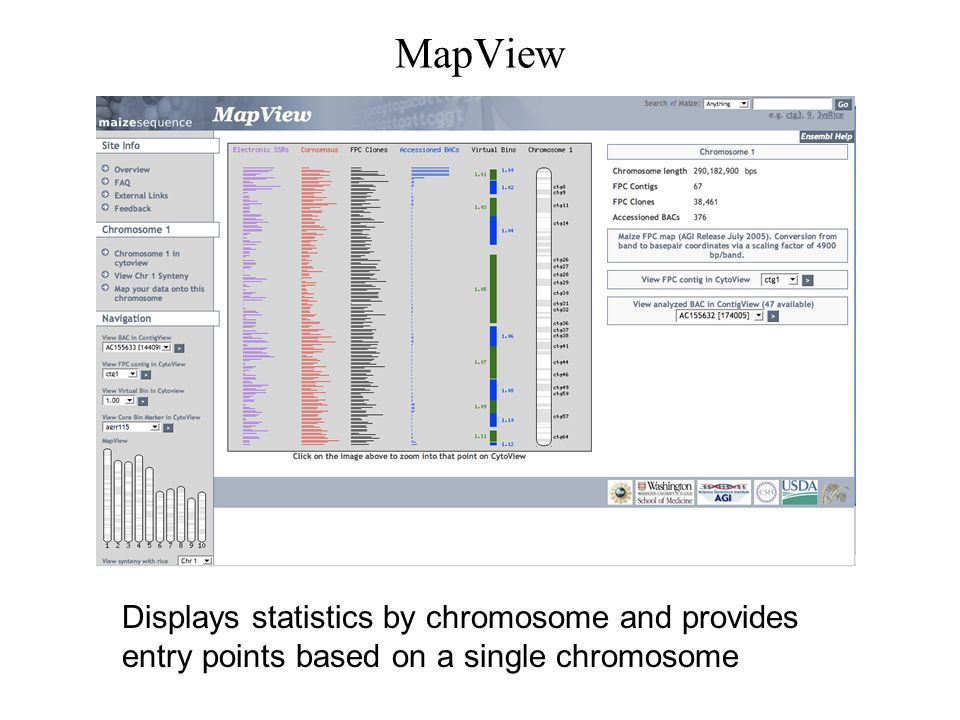 MapView Displays statistics by chromosome and provides entry points based on a single chromosome