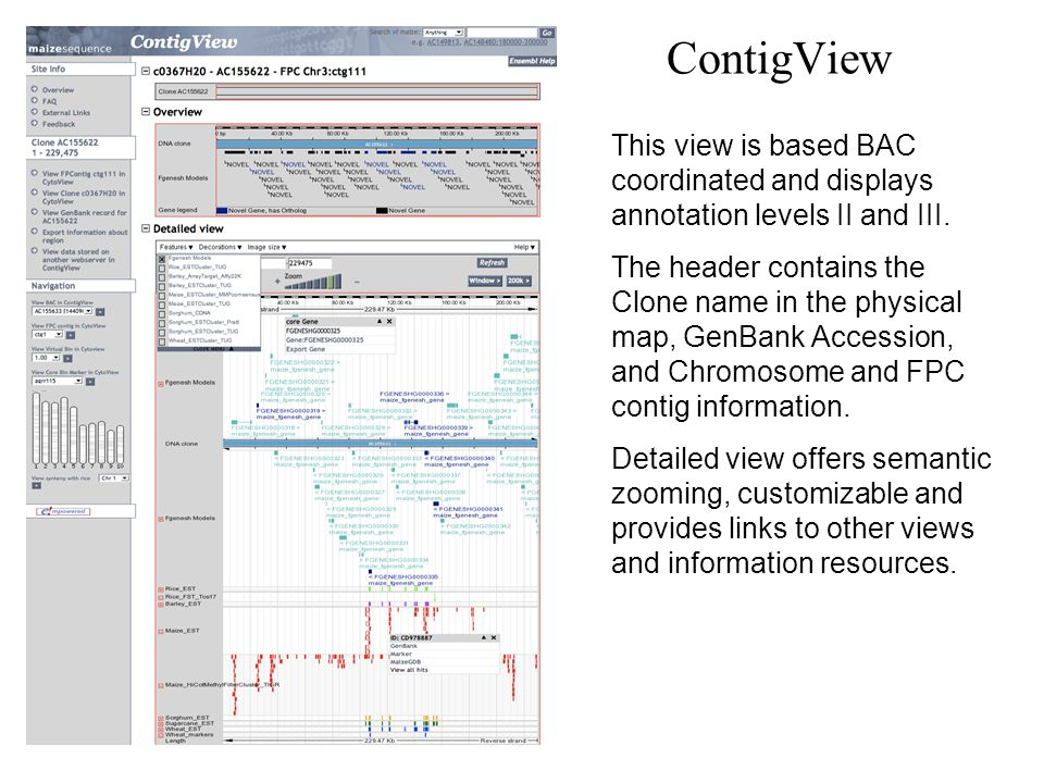 ContigView This view is based BAC coordinated and displays annotation levels II and III.