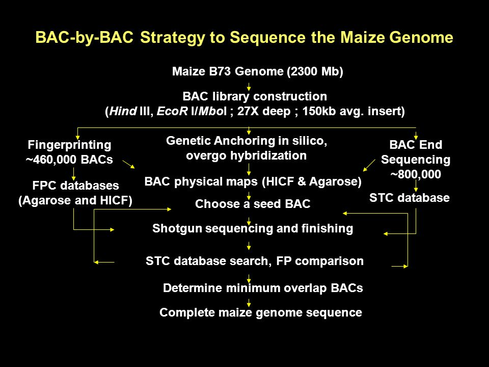 BAC-by-BAC Strategy to Sequence the Maize Genome