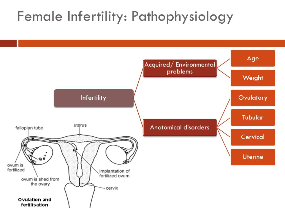 female infertility Learn here about the different causes, signs, costs & treatments for infertility in women we can offer help in understanding female infertility.