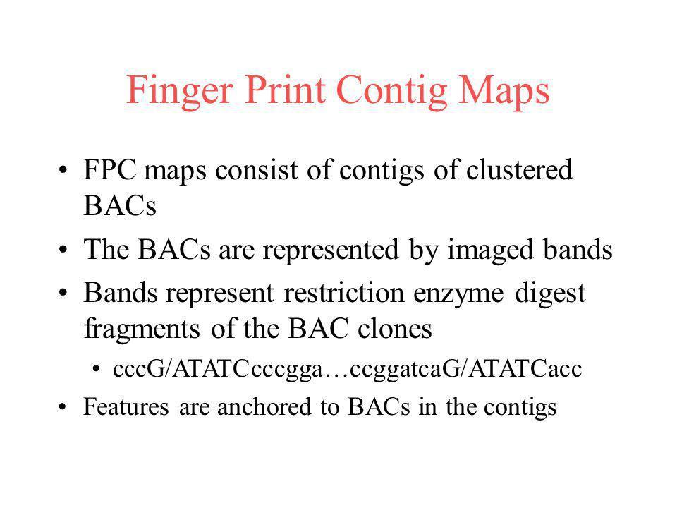 Finger Print Contig Maps