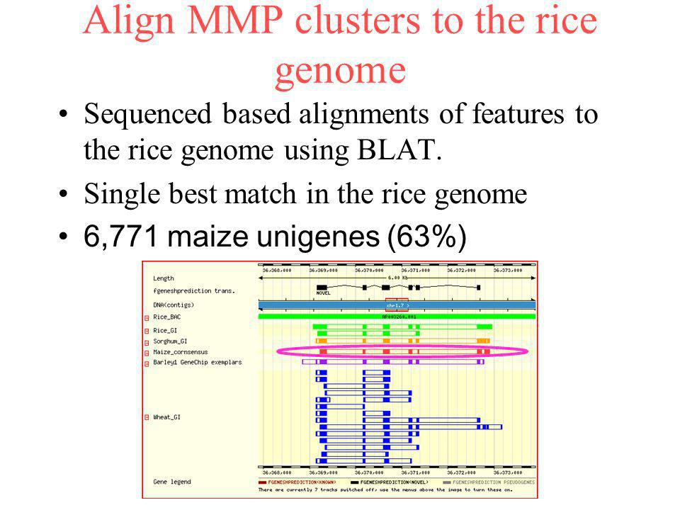 Align MMP clusters to the rice genome