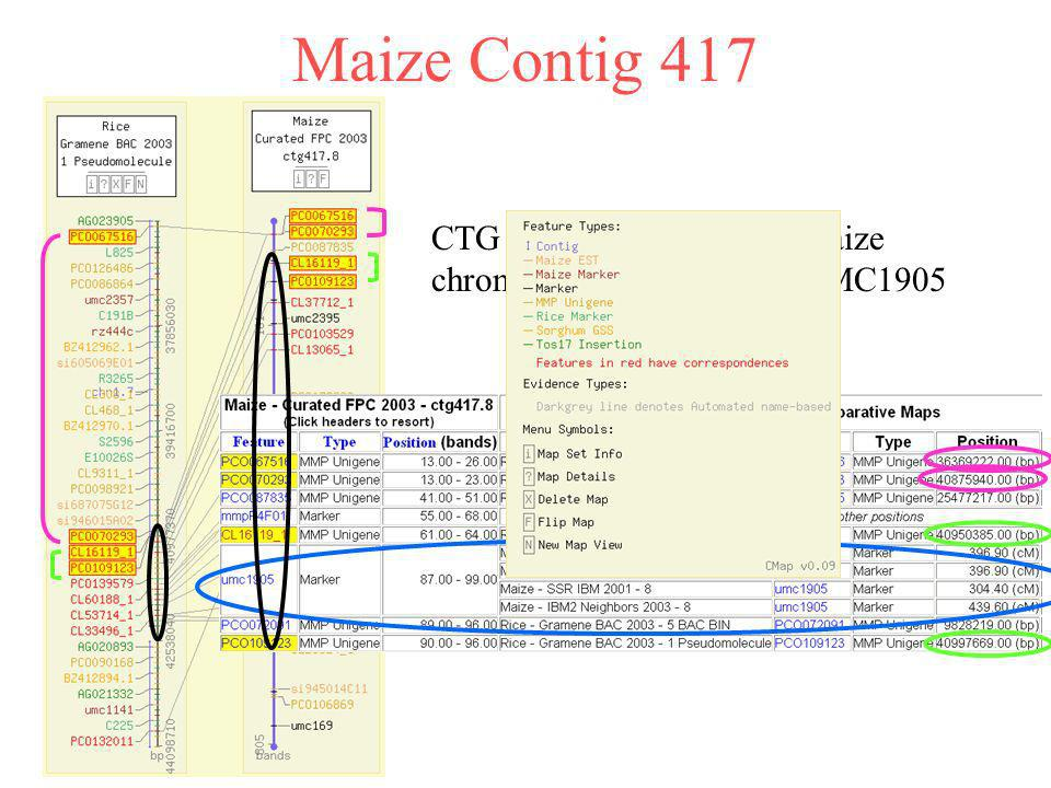 Maize Contig 417 CTG 417 Anchored to the maize