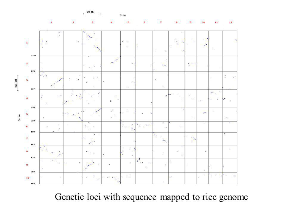Genetic loci with sequence mapped to rice genome