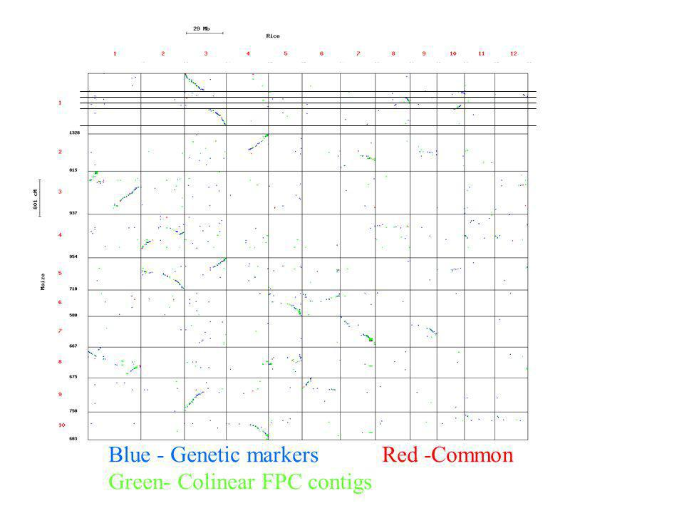 Blue - Genetic markers Red -Common