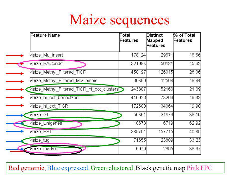 Maize sequences Red genomic, Blue expressed, Green clustered, Black genetic map Pink FPC
