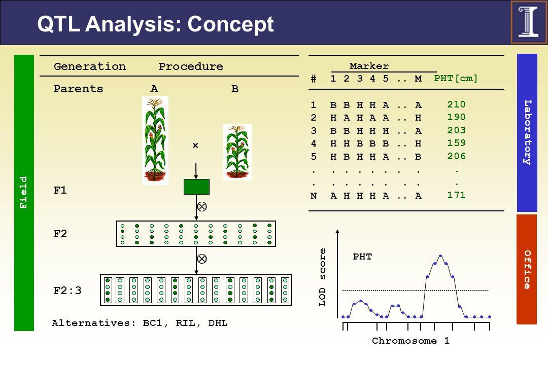 QTL Analysis: Concept  Parents F1 F2 F2:3 × A B Generation Procedure