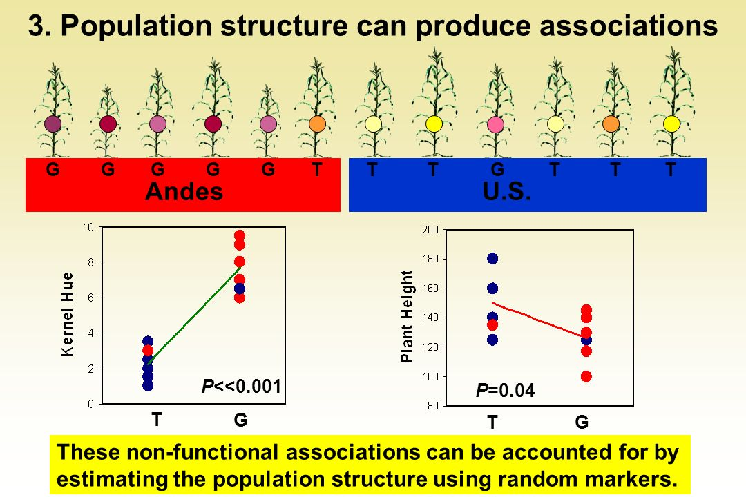 3. Population structure can produce associations