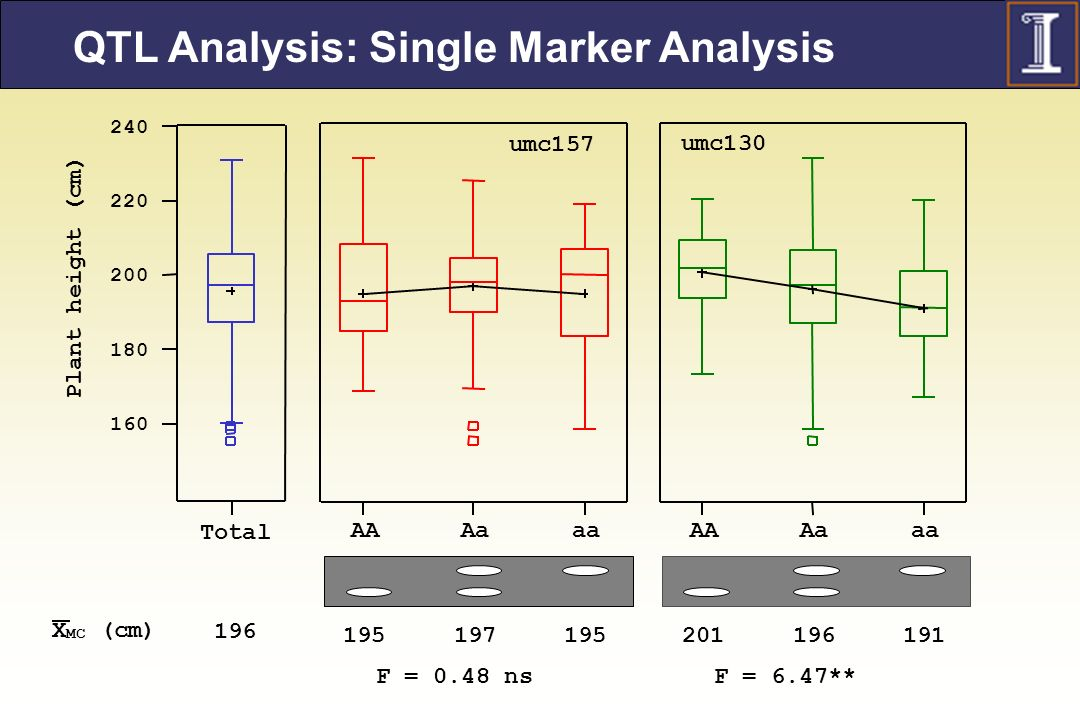 QTL Analysis: Single Marker Analysis