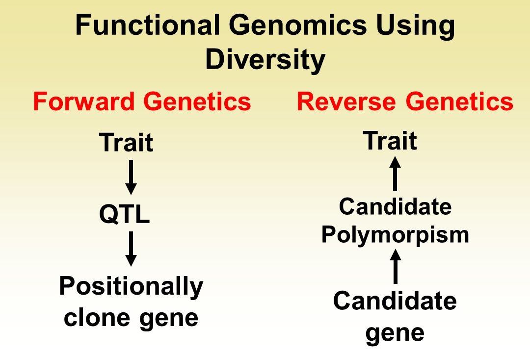 Functional Genomics Using Diversity