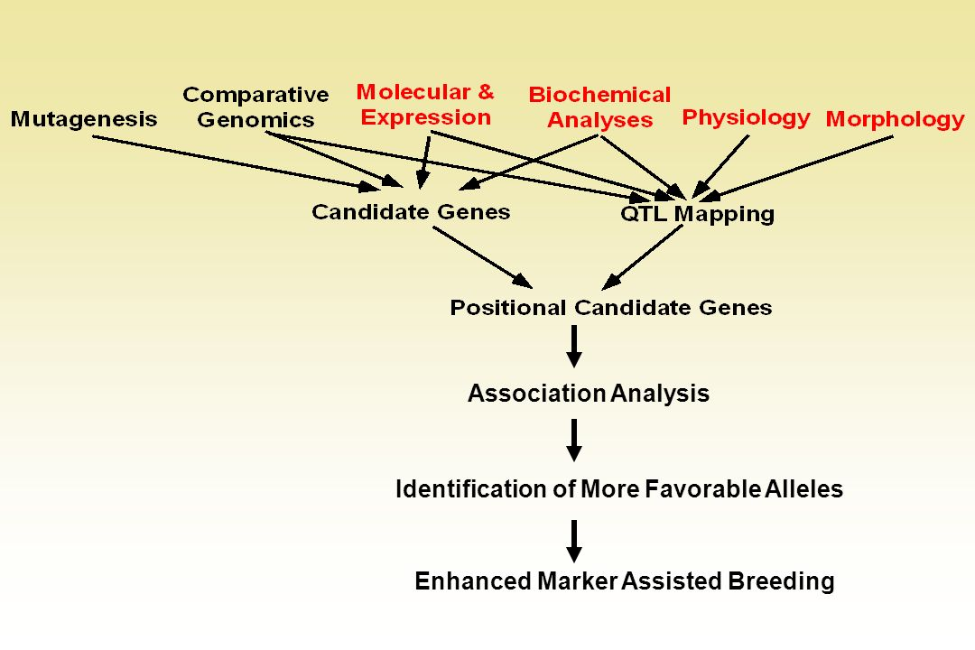 Association Analysis Identification of More Favorable Alleles Enhanced Marker Assisted Breeding