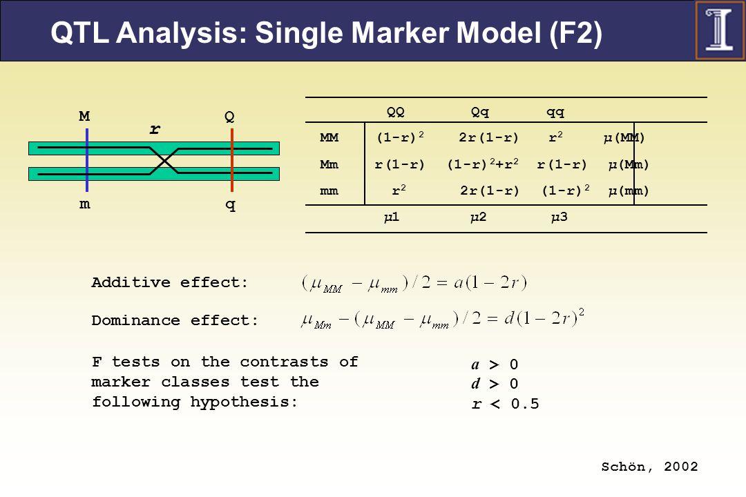 QTL Analysis: Single Marker Model (F2)