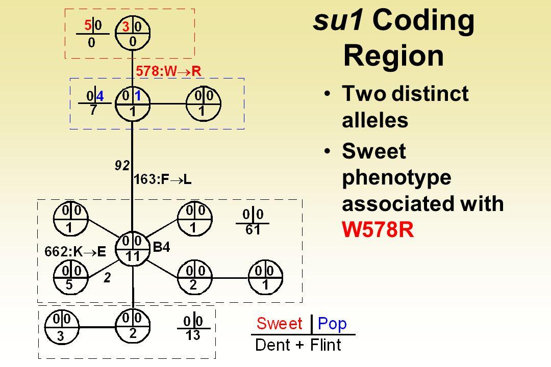 su1 Coding Region Two distinct alleles