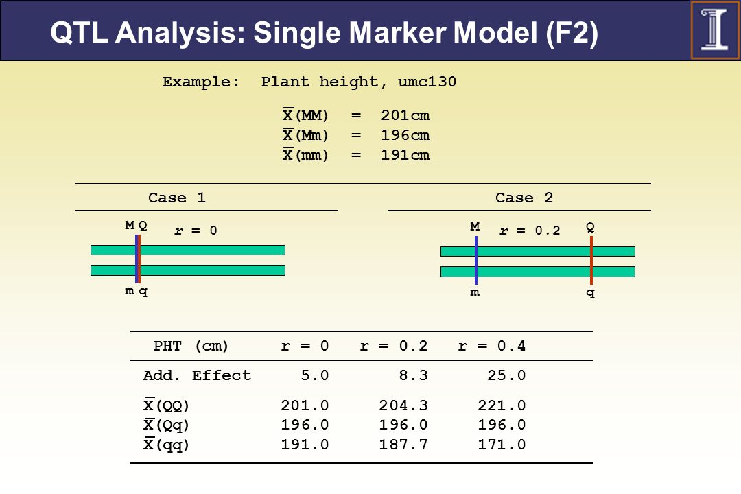 QTL Analysis: Single Marker Model (F2)