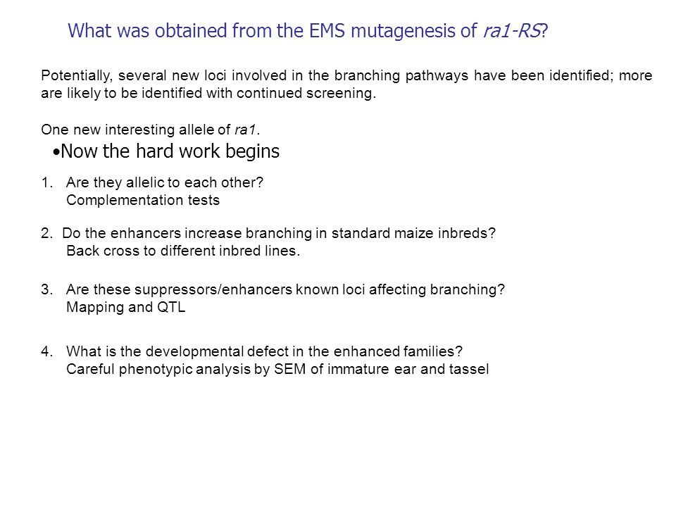 What was obtained from the EMS mutagenesis of ra1-RS