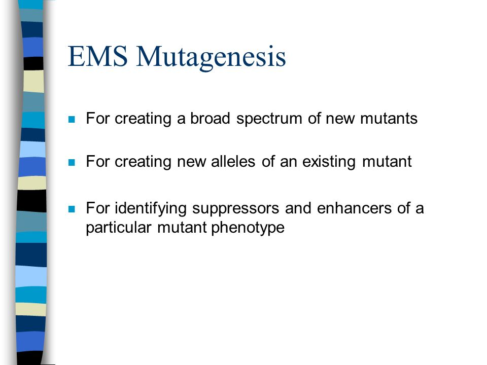EMS Mutagenesis For creating a broad spectrum of new mutants
