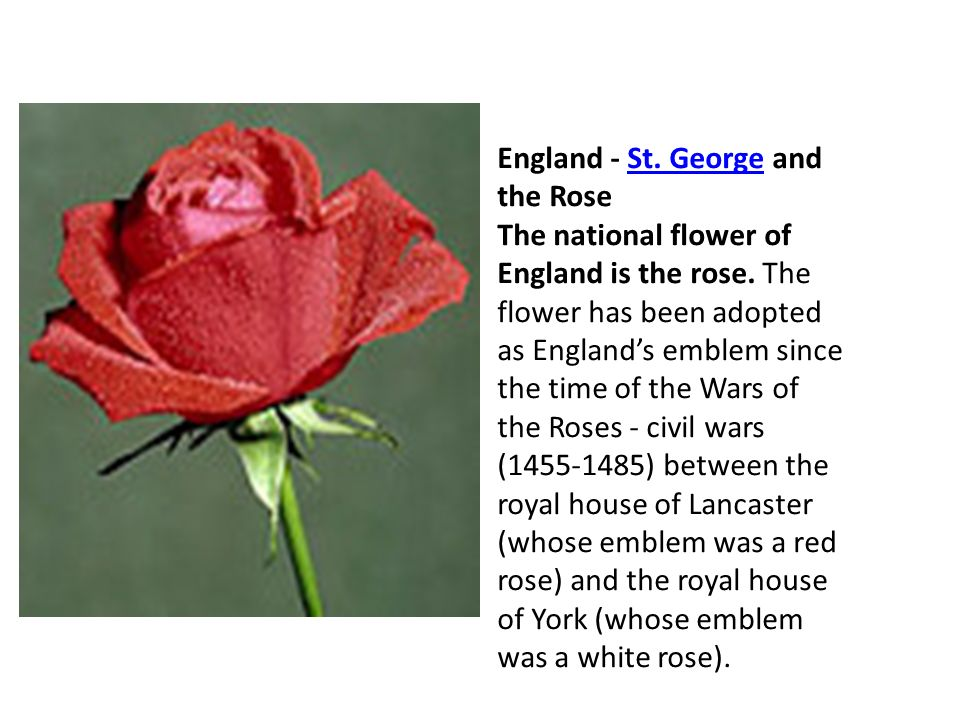 England - St. George and the Rose The national flower of England is the rose.