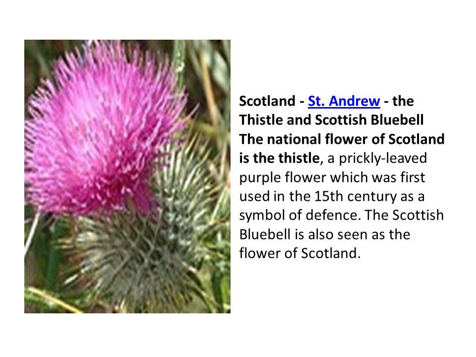 Scotland - St.