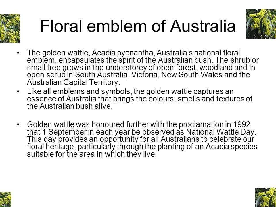 Floral emblem of Australia