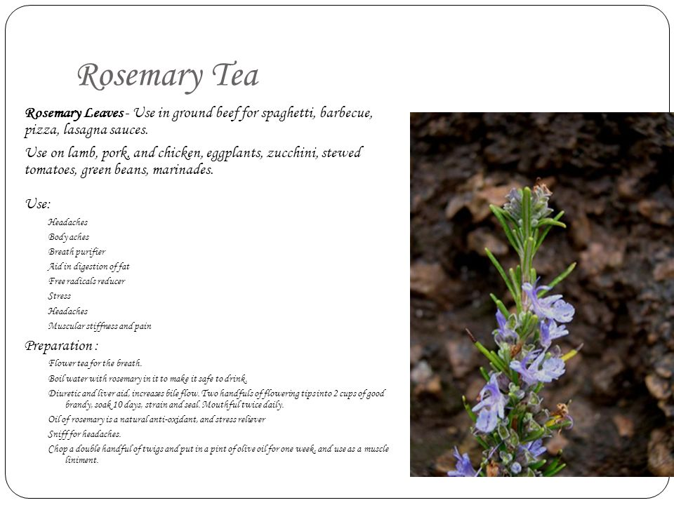 Rosemary Tea Rosemary Leaves - Use in ground beef for spaghetti, barbecue, pizza, lasagna sauces.