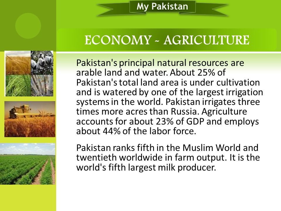 My Pakistan ECONOMY - AGRICULTURE.