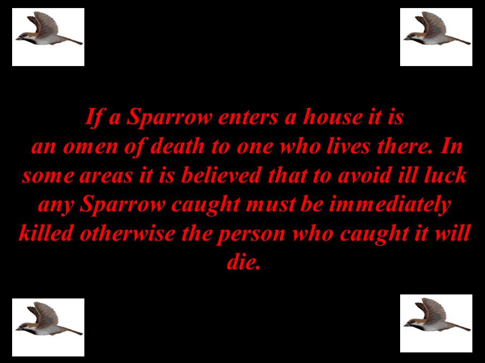 If a Sparrow enters a house it is