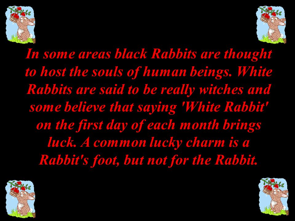 In some areas black Rabbits are thought to host the souls of human beings. White Rabbits are said to be really witches and some believe that saying White Rabbit on the first day of each month brings luck. A common lucky charm is a Rabbit s foot, but not for the Rabbit.